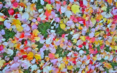 "Cubed Haiku .: ""Nature IS…Colour"" #NokiaN8"